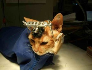 Gatto-Vivisezione