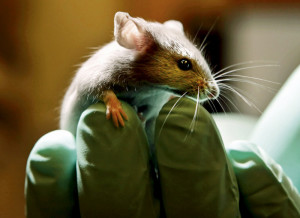 Britain Animal Testing