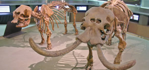 museo_archeologico_long4