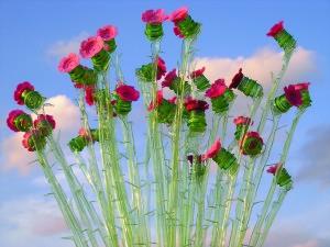 """Roses"" - Veronika Richterová"