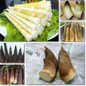Germogli-Bambù